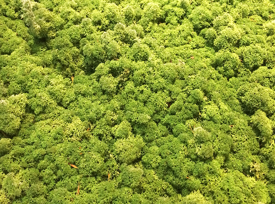 Rainforest From Above, 2017